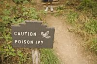How to Get Poison Ivy Off Your Hiking
